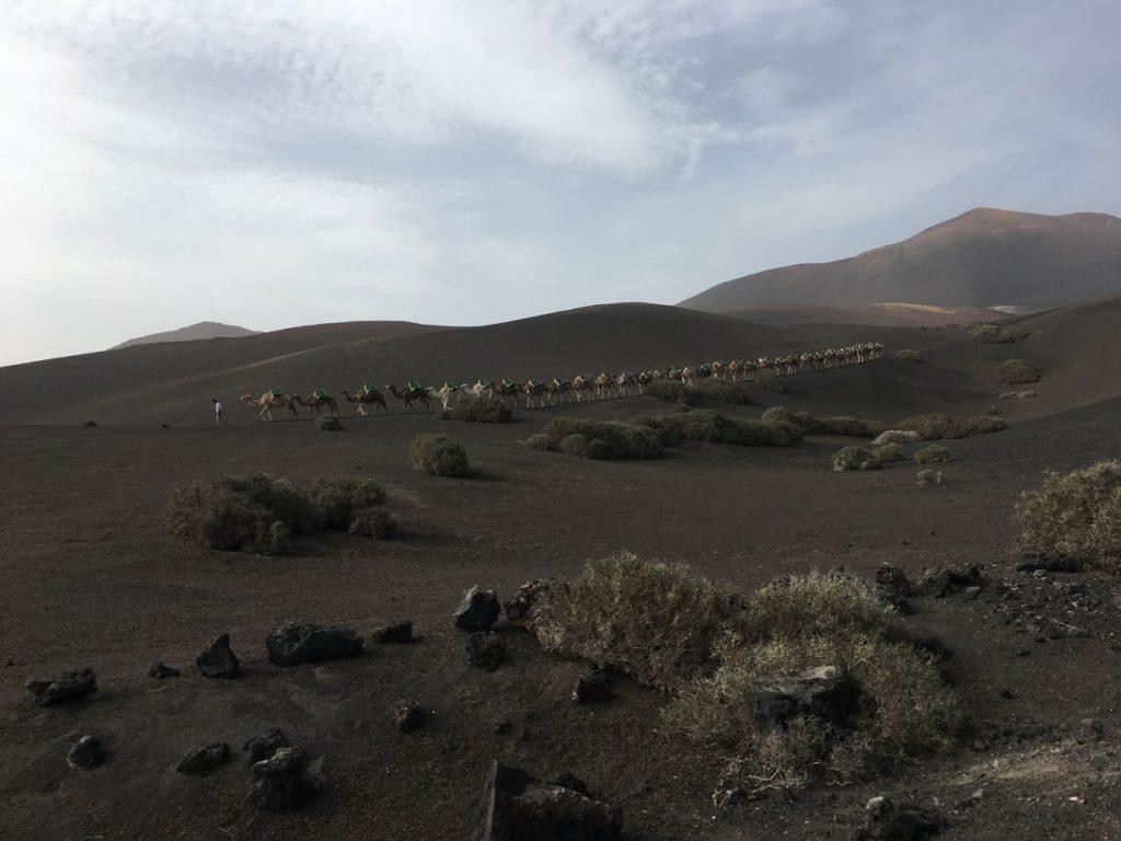 Camel Tour Lanzarote Volcano