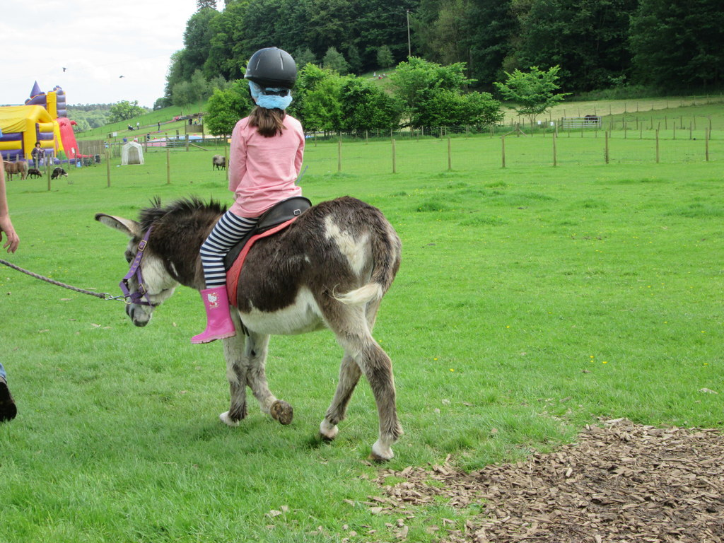 Mabie Farm Park - Donkey Ride